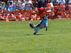 Frisbee Dog Competitions. I've got it!...