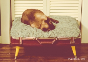 TUBE Magazine_Sarah Elliott_DYI pet bed_14