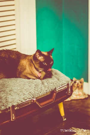 TUBE Magazine_Sarah Elliott_DYI pet bed_15